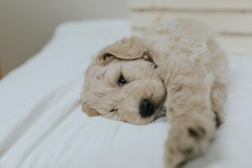 Puppies-Week-6-27.jpg