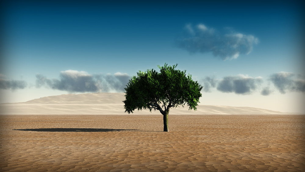 background-green-tree-middle-desert-wallpaper.jpg