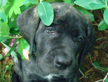 Black puppy in foliage