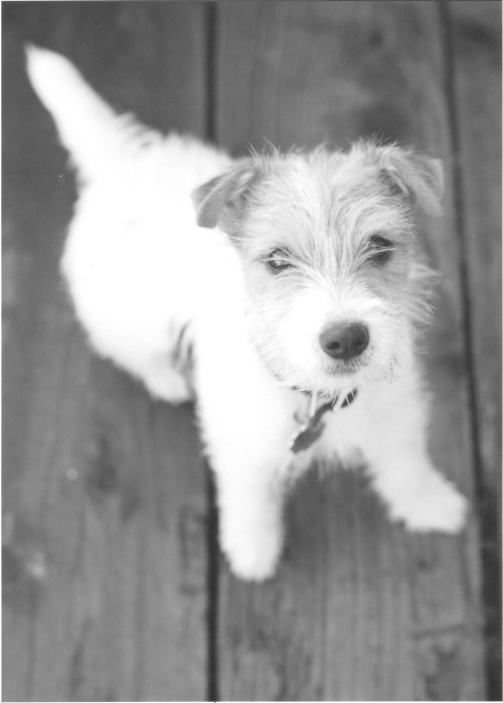 Small black and white dog on deck