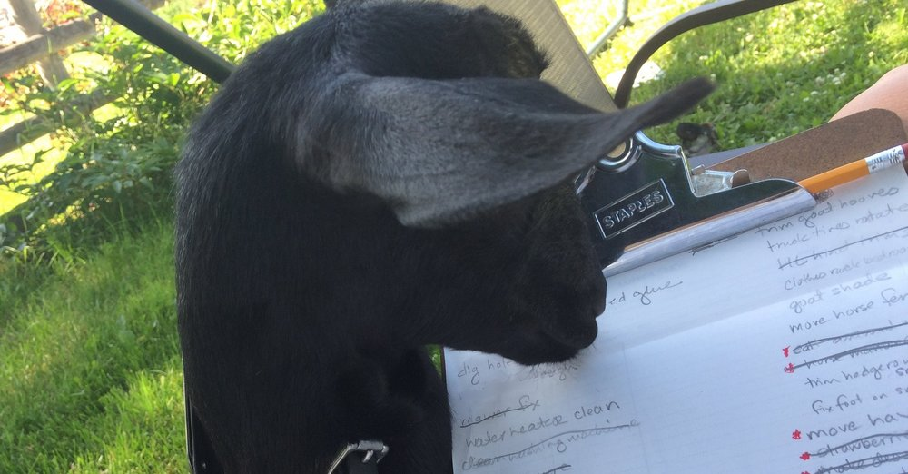Willow helping me with the Rusty Nail Farm clipboard of to do lists-- where undone outpaces done...