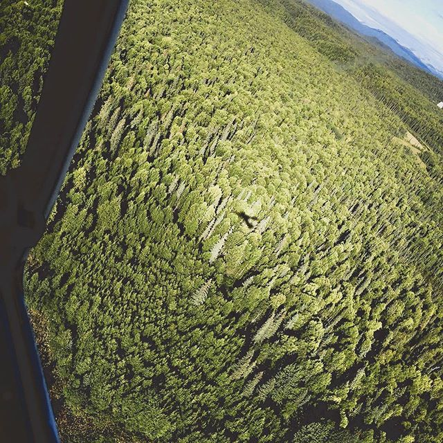 Stumbled across this beautiful reminder of summer.🌲If you think Alaska is amazing just walking around, you should see it from the air.