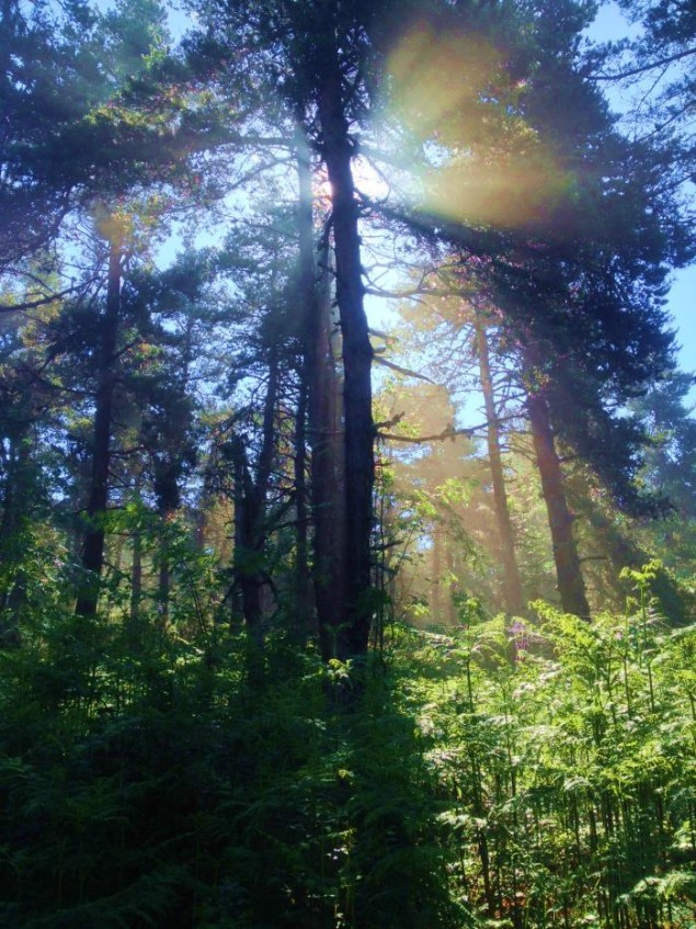 TREES-635x847.jpg