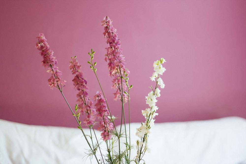 2014-05-life-of-pix-free-stock-photos-aureliejouan-flowers-min