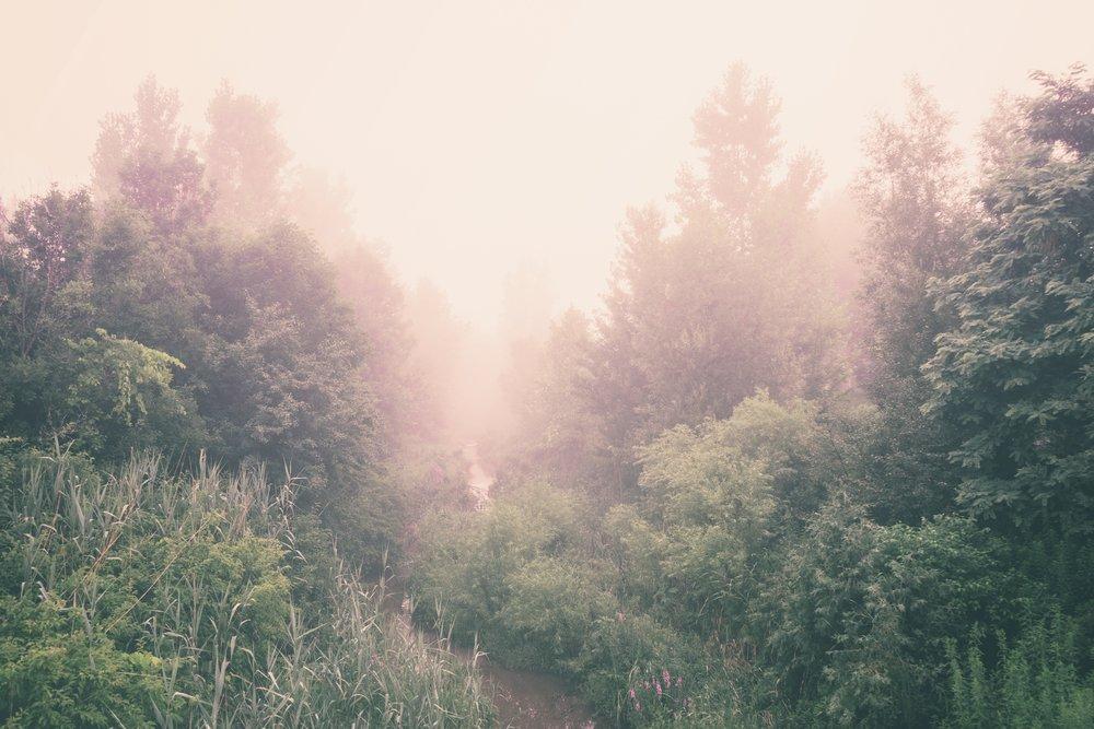 forestsunrise.jpg