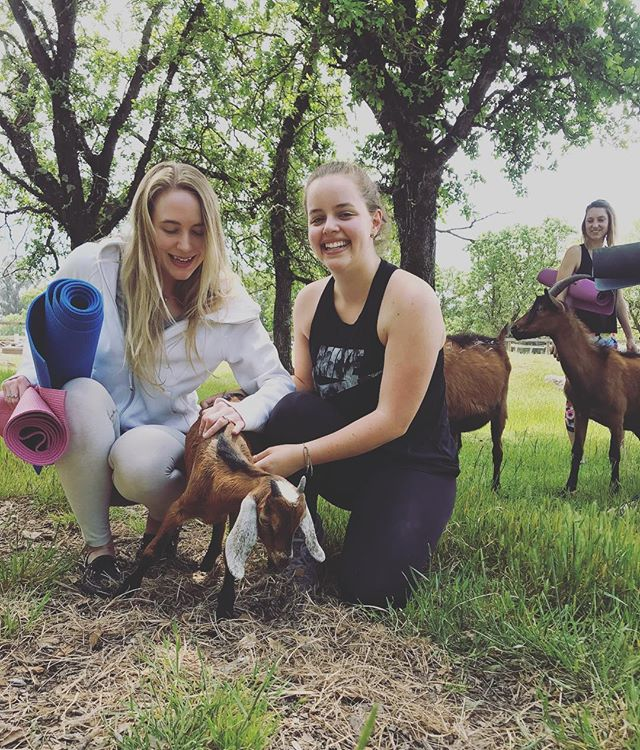 @AndyRallo and I were successful in our mission of making 🐐 frens 😬 #goatyoga #wellbeback #itwasapoopfreeexperience