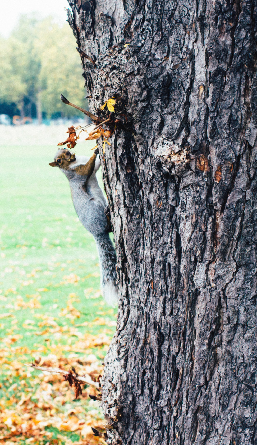 squirrel in a tree.jpg