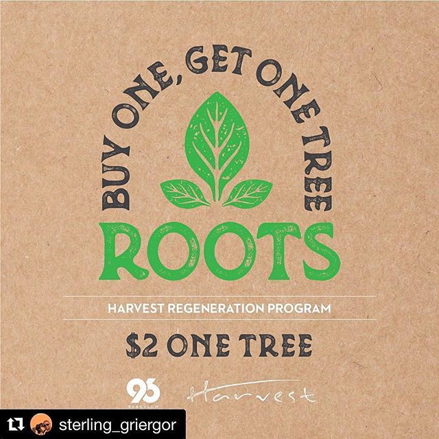 We are pleased, honoured and excited to launch this project with @harvestnewrybar We aim to plant 50000 native food trees in the region engaging business and community with indigenous food culture. Stay tuned... #regenerativeagriculture #bushfood #ediblelandscape #buyonegetonetree #harvestnewrybar #96bangalow