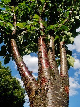 bright tree.jpg