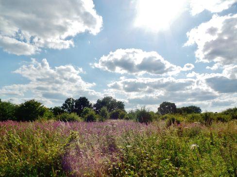 sunny meadow.jpg