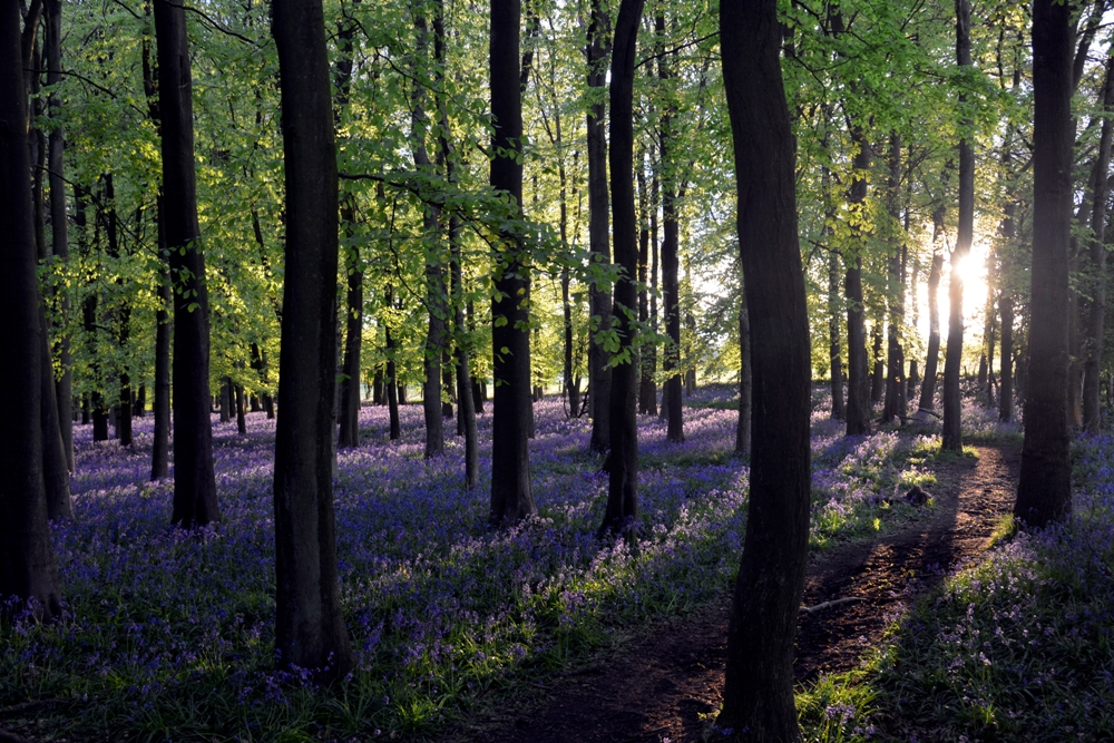 ASHRIDGE EVENING  9th May 2015 024.JPG