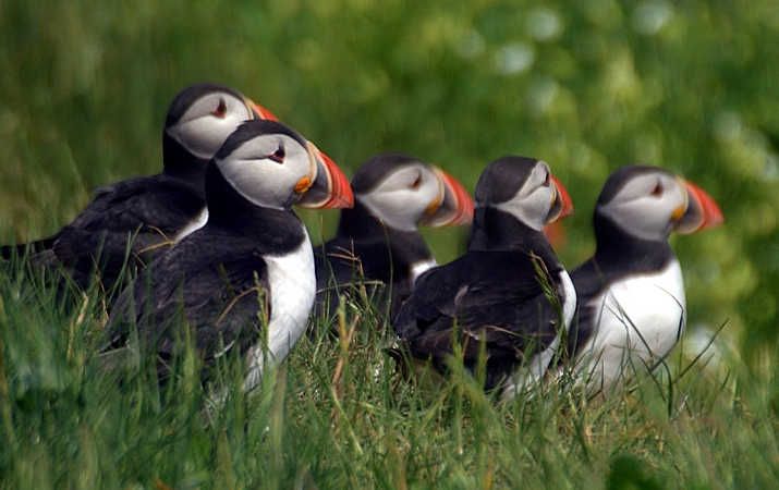 FARNE ISLES AND SEAHAM 686_edited-2.jpg