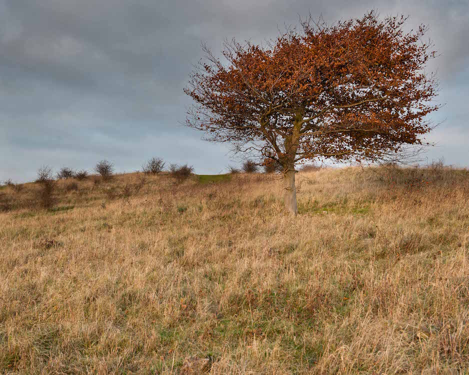 Tree, Warden Hill (c) Mick Thurman, 2014. This image was made while walking the dog near home in Luton.