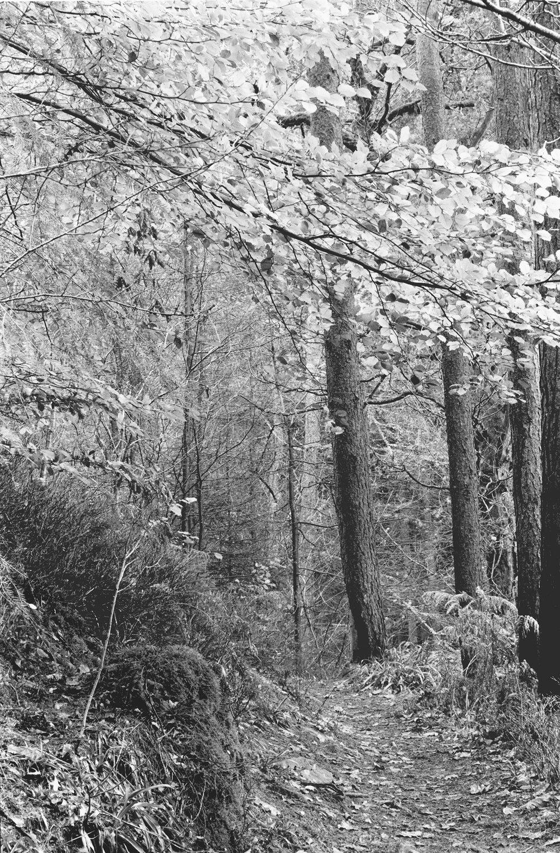 Hamsterley Forest (c) Karen Thurman