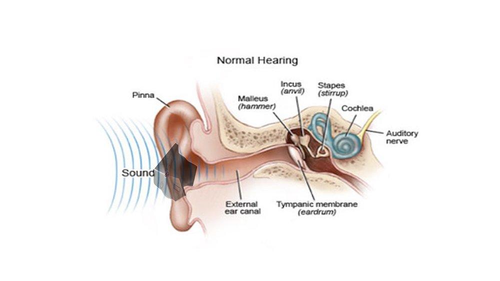 Testing Earphones ergonomics -