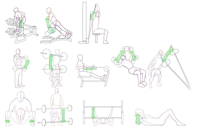 Motion Form Study Gym Workouts -