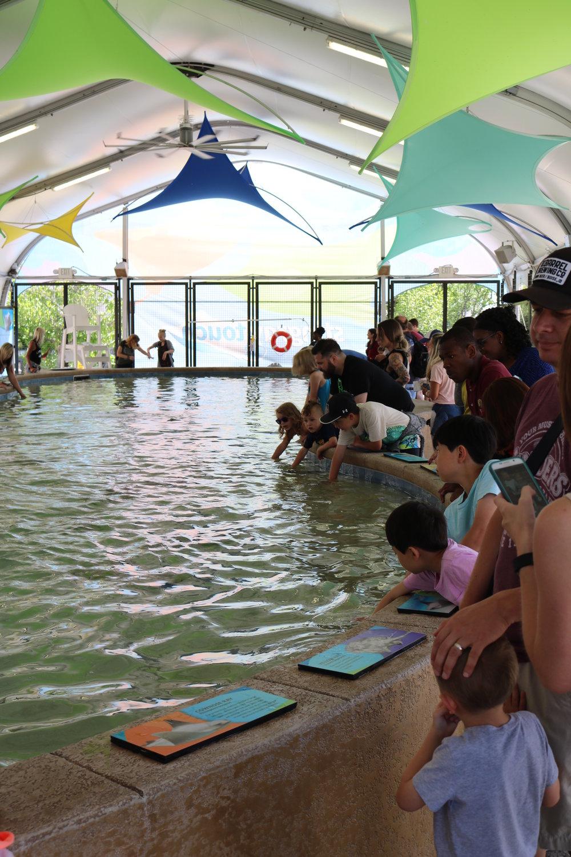 The Shedd Aquarium