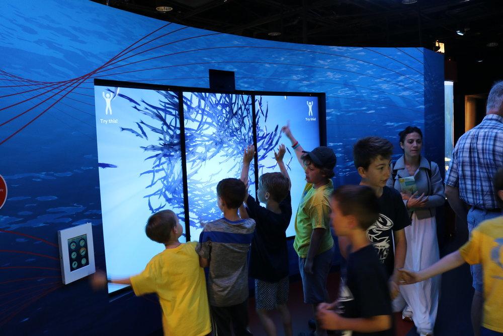 Featured: The Shedd Aquarium