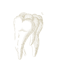 tooth4.png