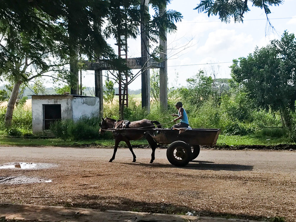 Once you get out of the city, horse and buggy were very common
