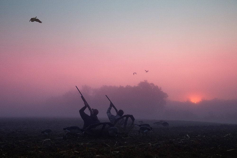Shooting Geese