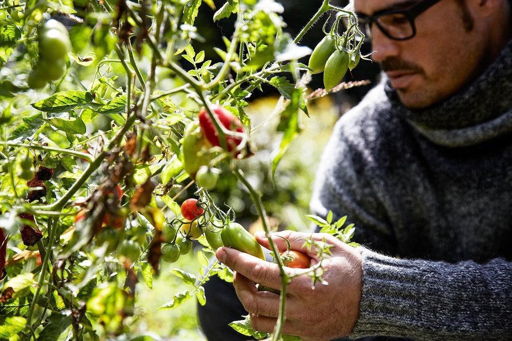 Gathering Vegetables Harvest