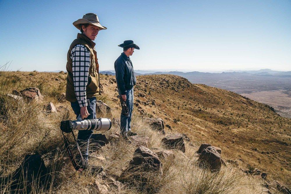Modern Huntsman Desert Bighorn Sheep Charles Post Texas Parks & Wildlife