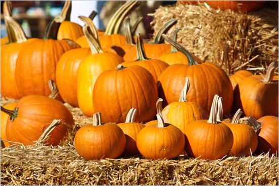 Pumpkin_patch8.jpg