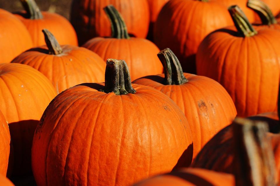 pumpkin-970236_960_720.jpg
