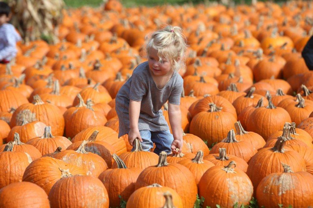 pumpkin-patch-all-seasons-orchard-woodstock-16-1024x683.jpg