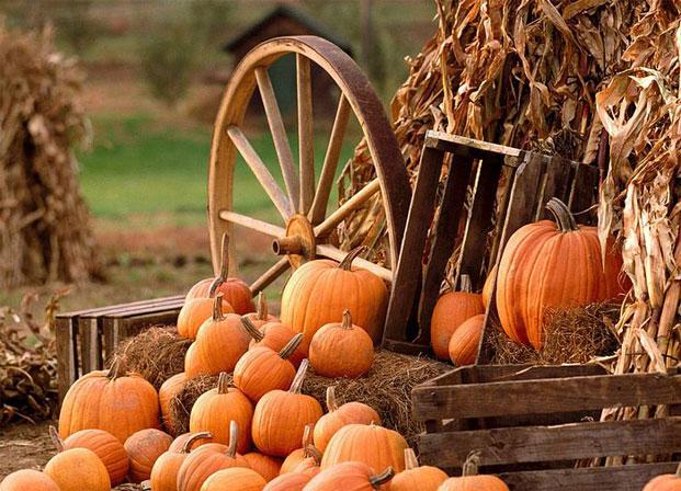 pumpkin-tikve-bundece.jpg