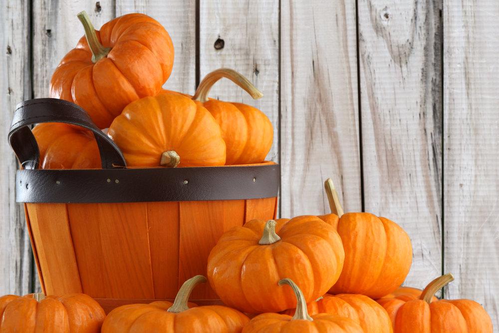pumpkin-patch-b.jpeg