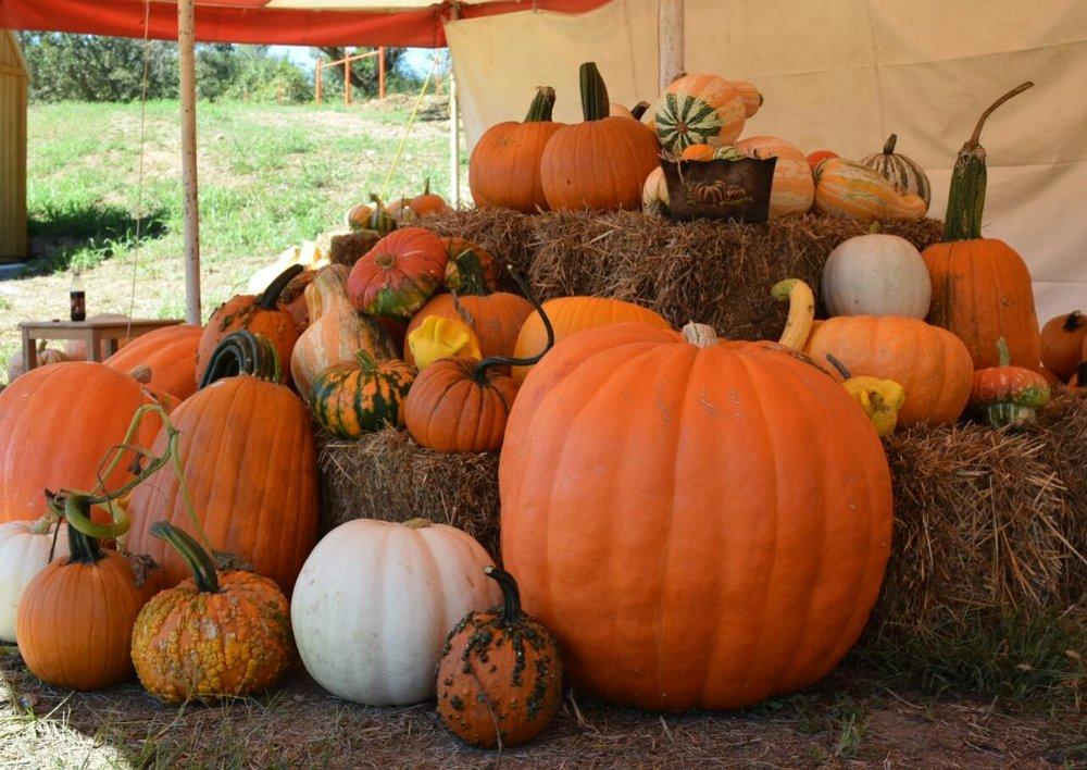 pumpkin14500676_1678334482441681_7446662199432616346_o.jpg
