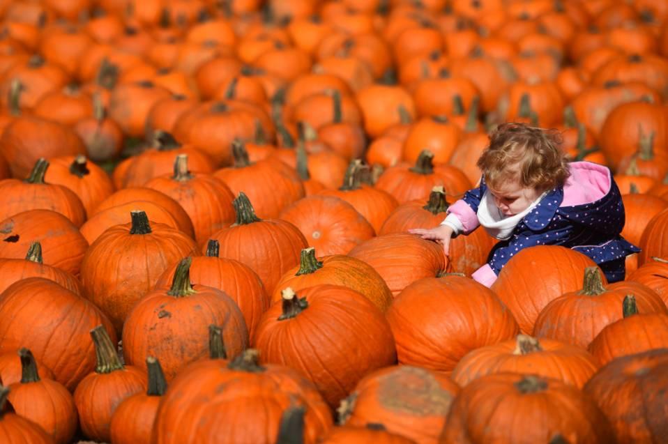 pumpkins-10-jpg.jpg