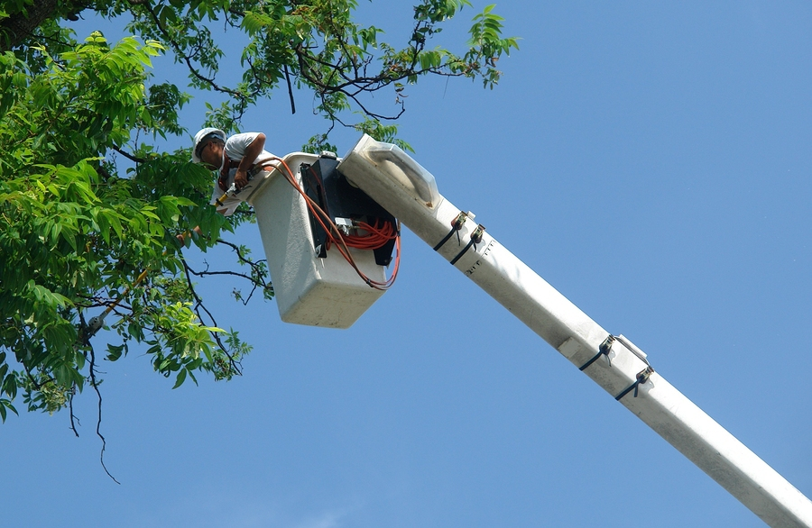 TREE REMOVAL - We have a staff of experienced certified Arborists who are trained in the methods of removing trees in an efficient and safe manner. Click Here for more information about tree removal.