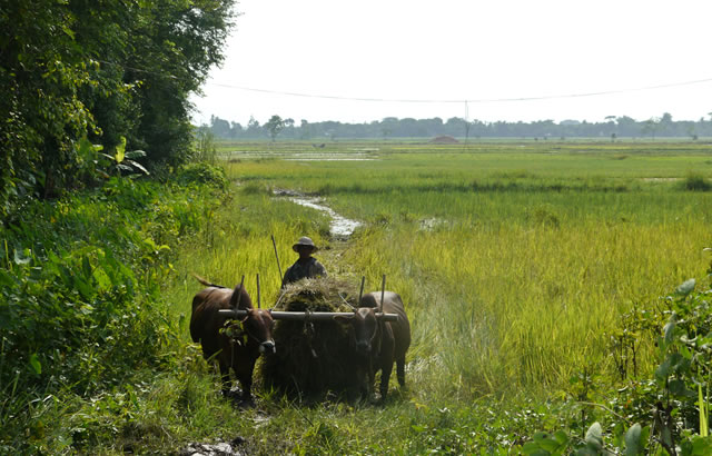 Rice banks are a means for farmers to save and access business loans