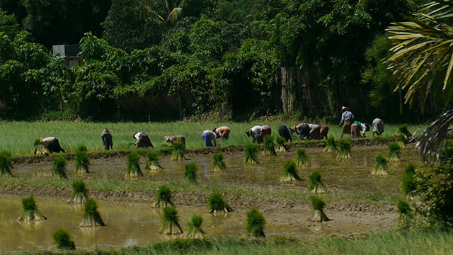 Cooperative farming in Myanmar