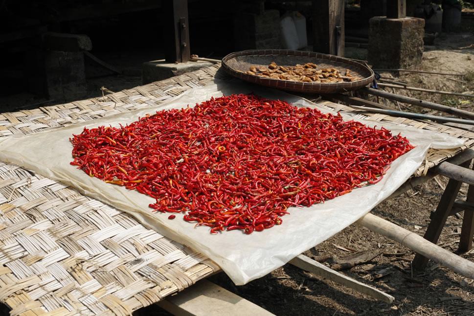 drying-chillies.jpg