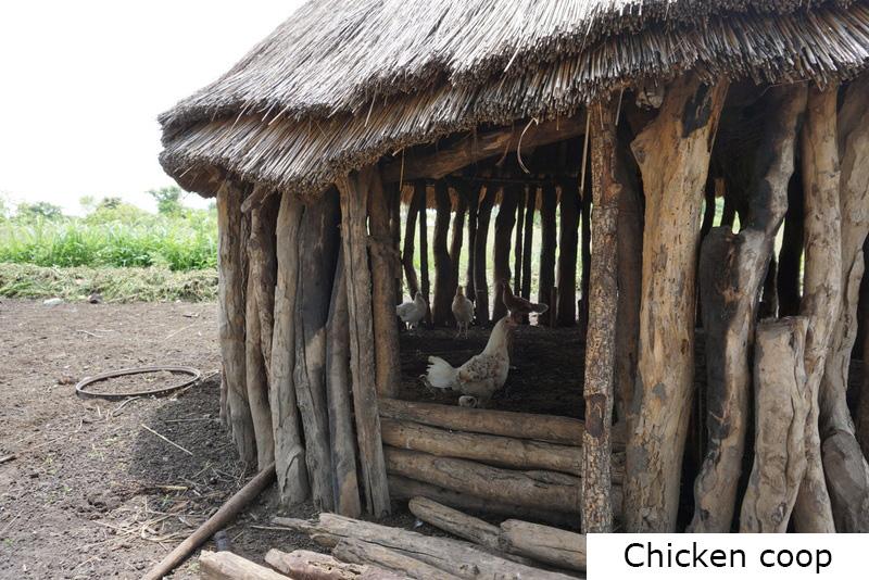 chicken-coop.JPG