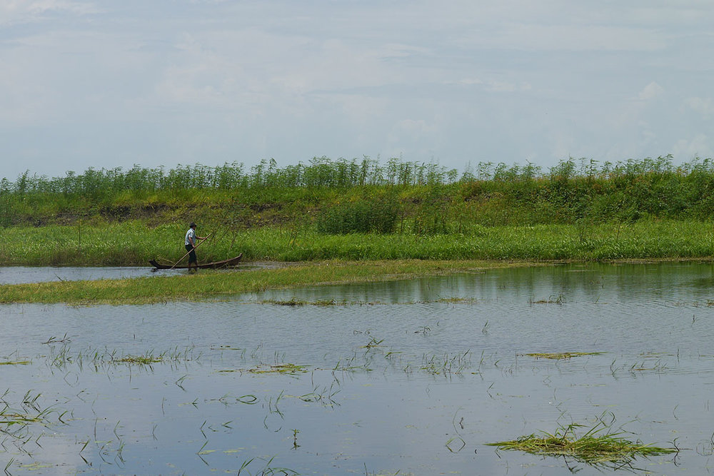 Myanmar is one of the top producers of rice in  the world. Rice is considered to be Myanmar's most important crop.