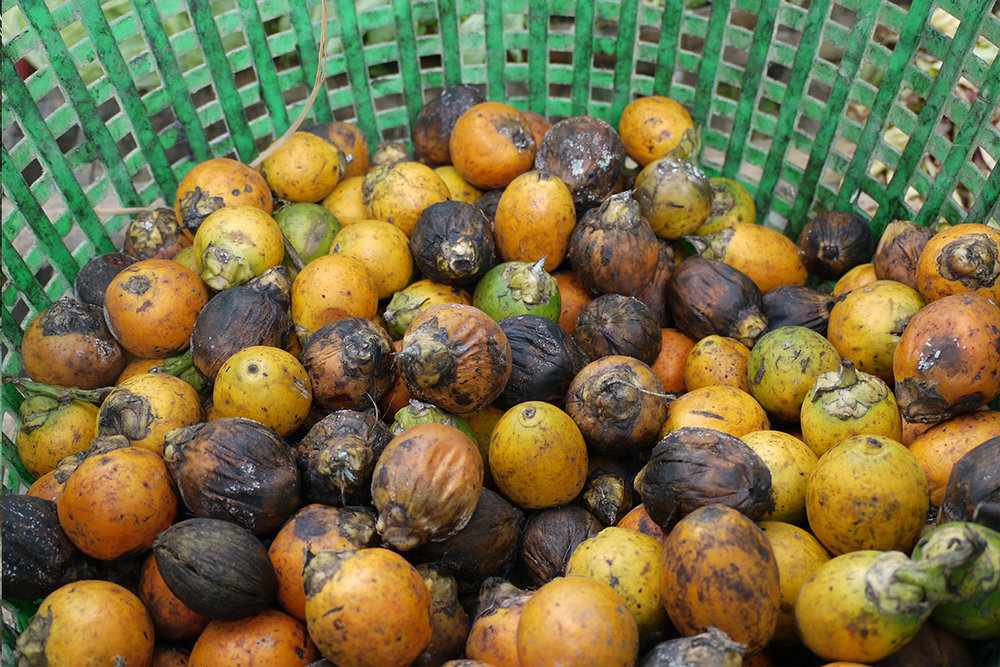 A wide variety of tropical fruits are grown in Myanmar, including jackfruit, durian, mangoes, coconut, bananas, red and yellow watermelon, avocados, and more.