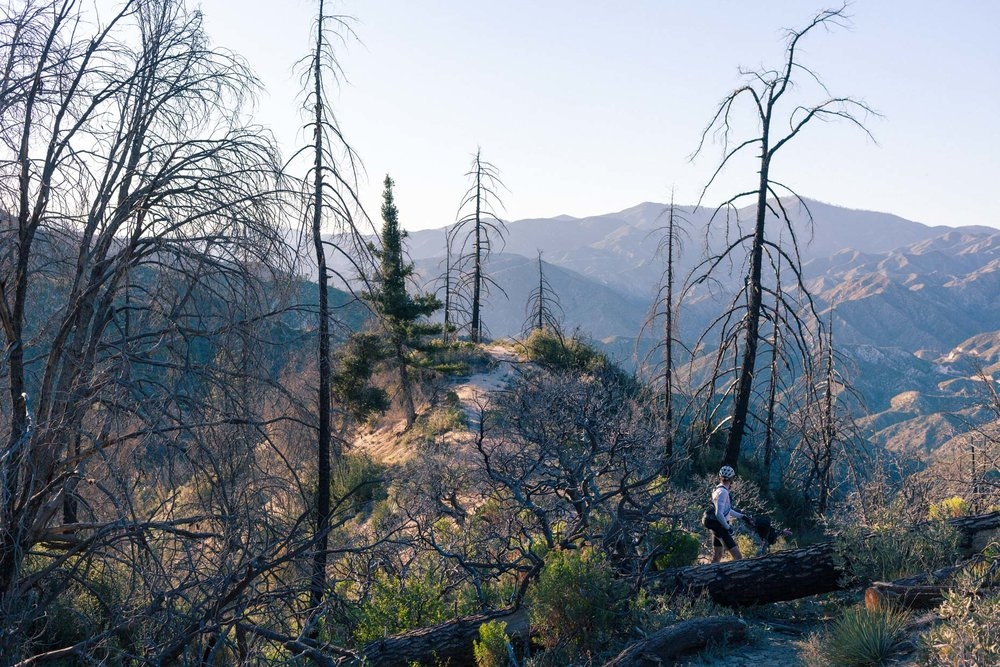 Looking for the trail after a fire in Angeles National Forest