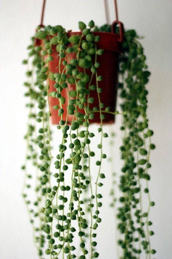 remain-simple-plants.jpg