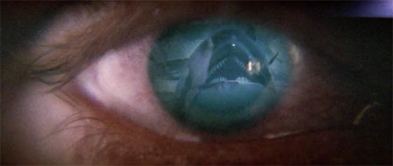 orca-4.jpg