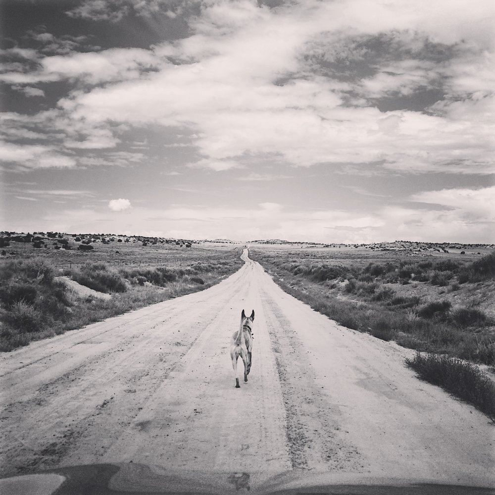 Back road to Chaco Canyon, New Mexico  (photo by Gabrielle Pietrangelo)