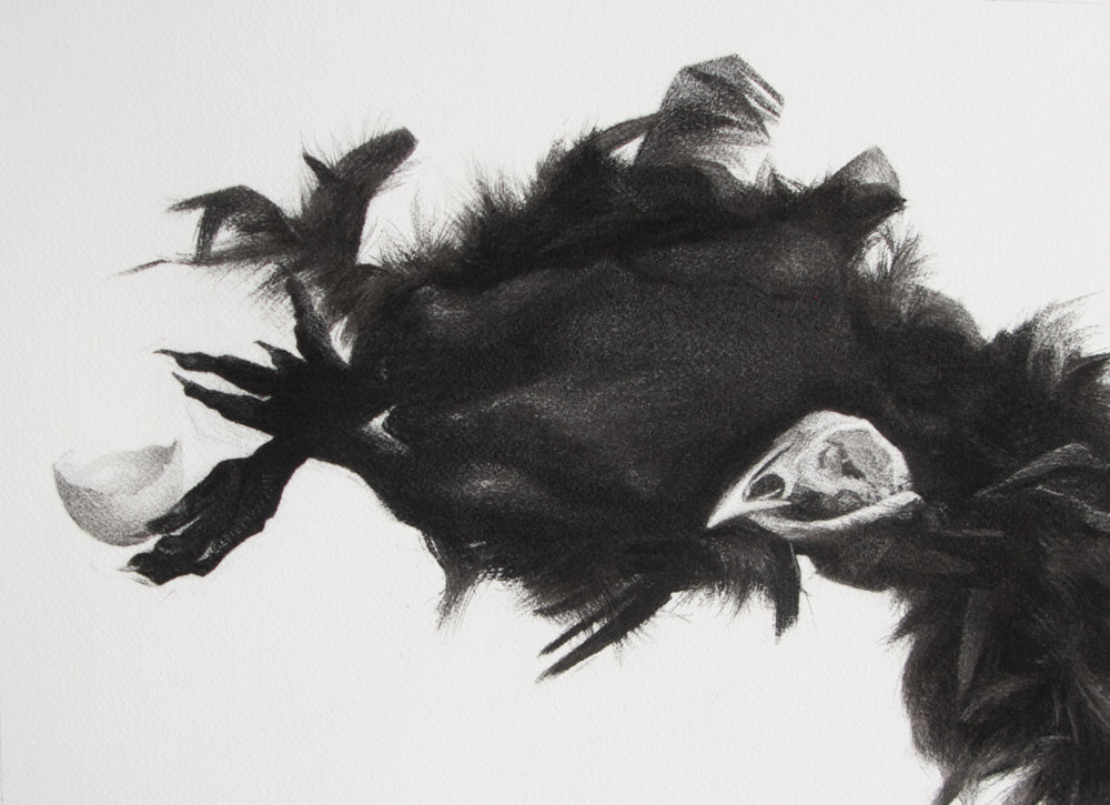 """Every night and every day Some forget just why they pray Every day and every night Something will be skinned on sight Something will be skinned on sight Some won't skip the skin of night   charcoal on paper 2018 30cm by 40cm  in conversation with Marc Nair's """"Auguries of Modern Innocence"""""""