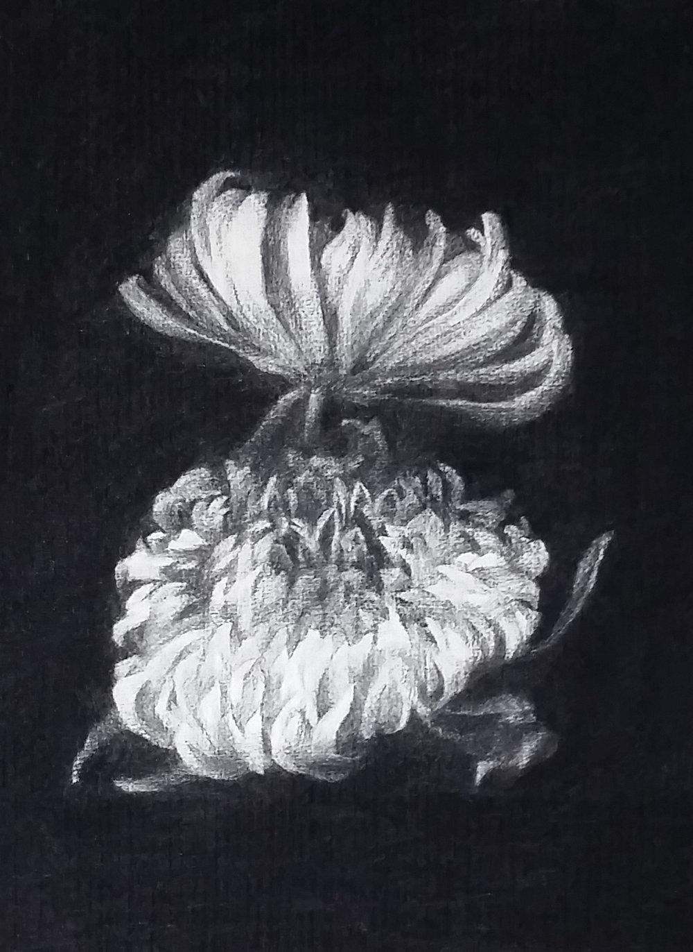 Flowers X.jpg