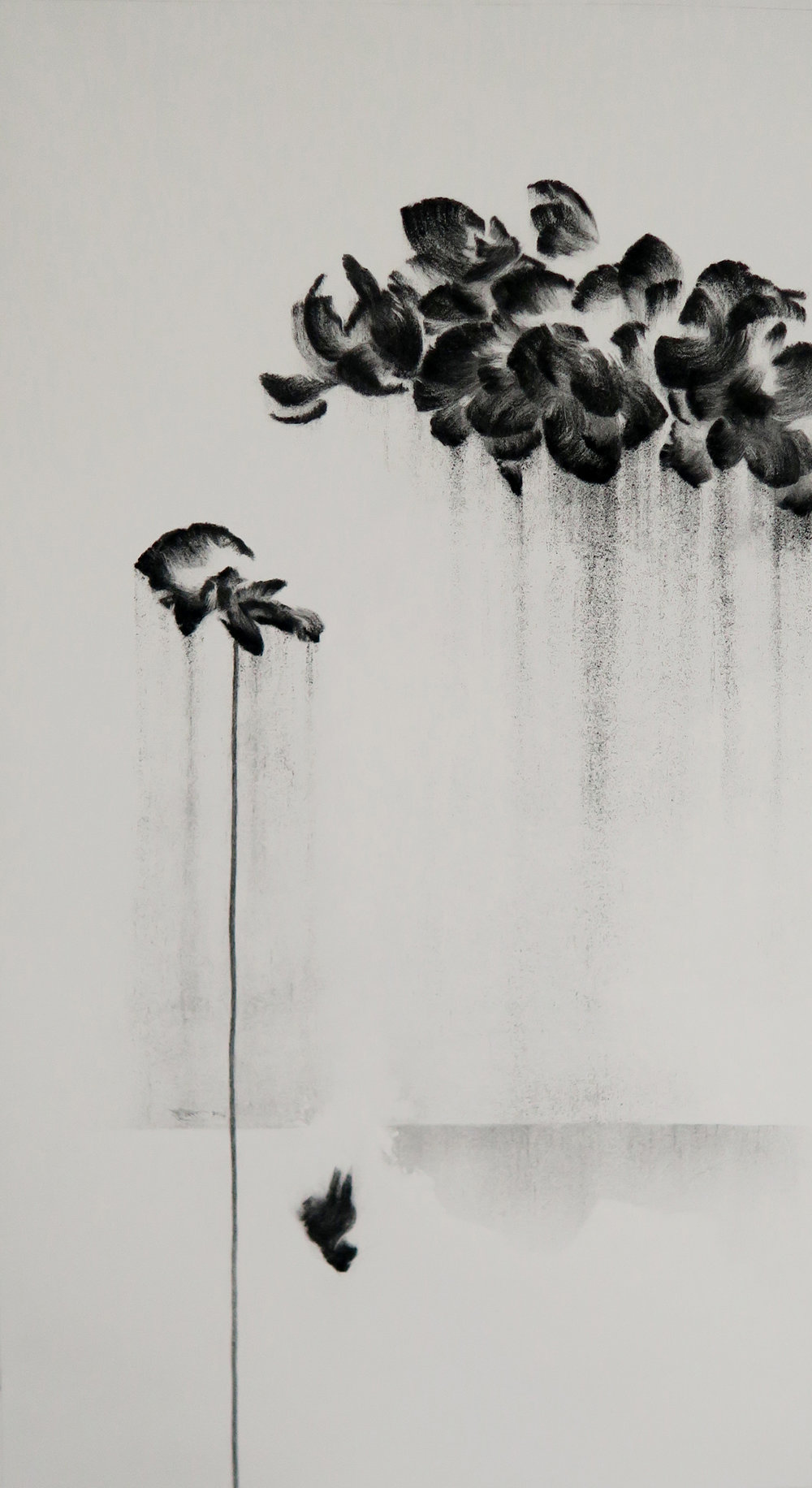 "Poppy Wall    Charcoal on paper 2017 100cm x 50cm  sold. Exhibited at Art Porters Gallery ""Flower Flights"" solo exhibition.  past series:  Flower Flights"