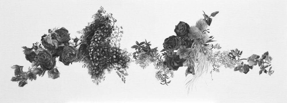 """Wingspan II    Charcoal on canvas 2018 40cm x 110cm  Exhibited at Art Porters Gallery """"Flower Flights"""" solo exhibition.  past series:  Flower Flights"""