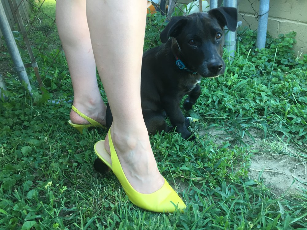 Shoe + puppy detail